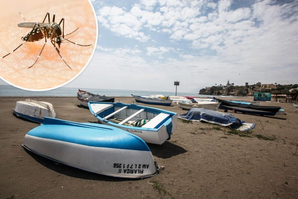 Costa Del Sol will be overrun with tiger mosquitoes when Brits return 'as lockdown creates perfect breeding conditions'