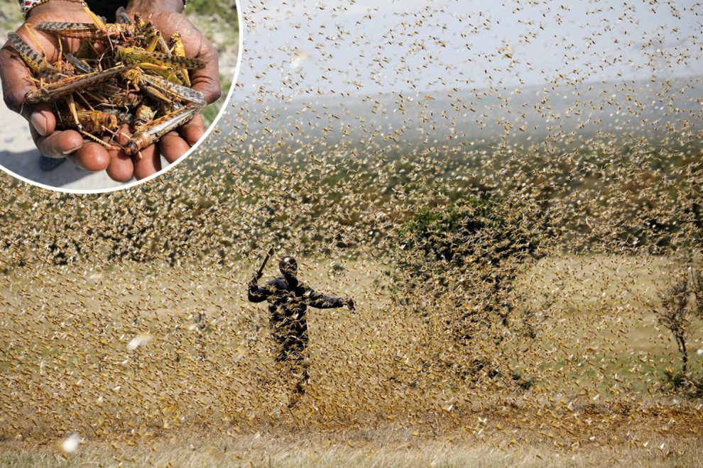 Largest ever locust swarms that are 'highly mobile' could cause catastrophe on 'biblical' scale in Africa, say experts