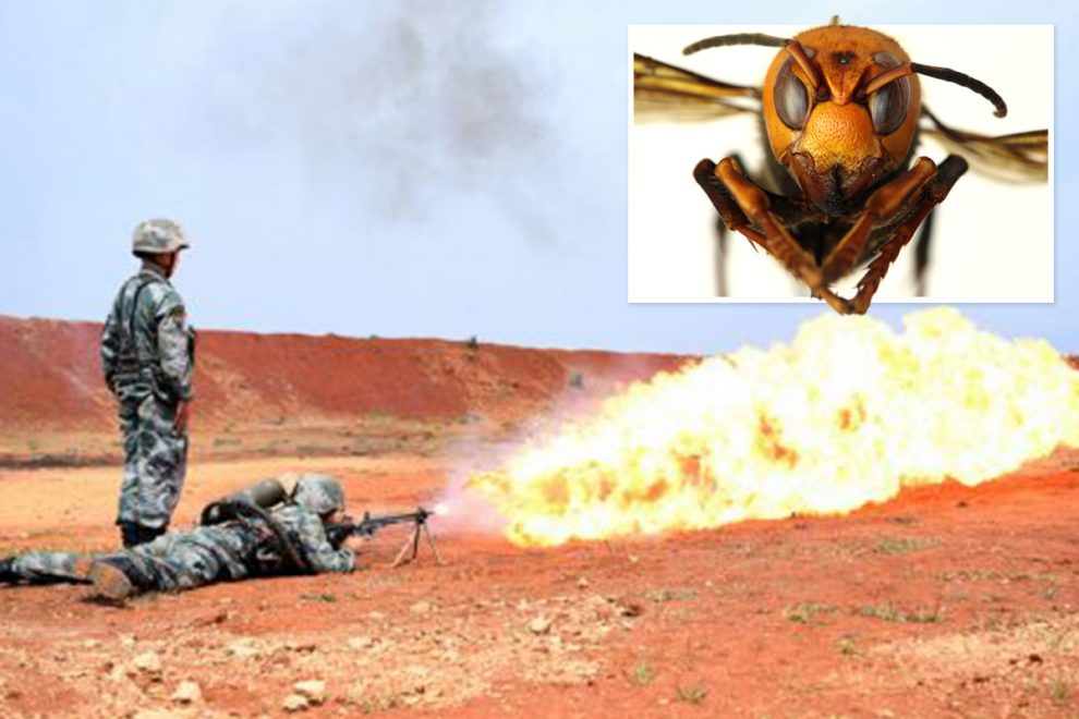 Chinese soldiers show off FLAMETHROWERS used to kill swarms of murder hornets as deadly insects head to US
