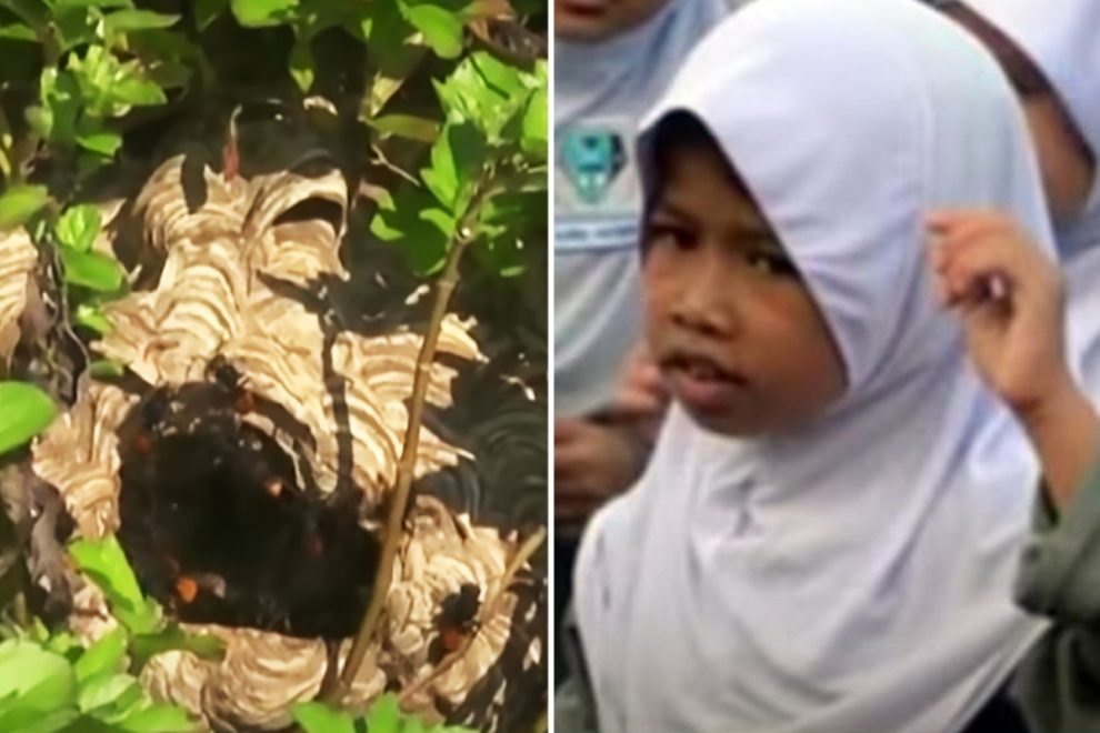 Girl, 8, killed by hornets who stung 65 times after she became stuck in fence in Malaysia