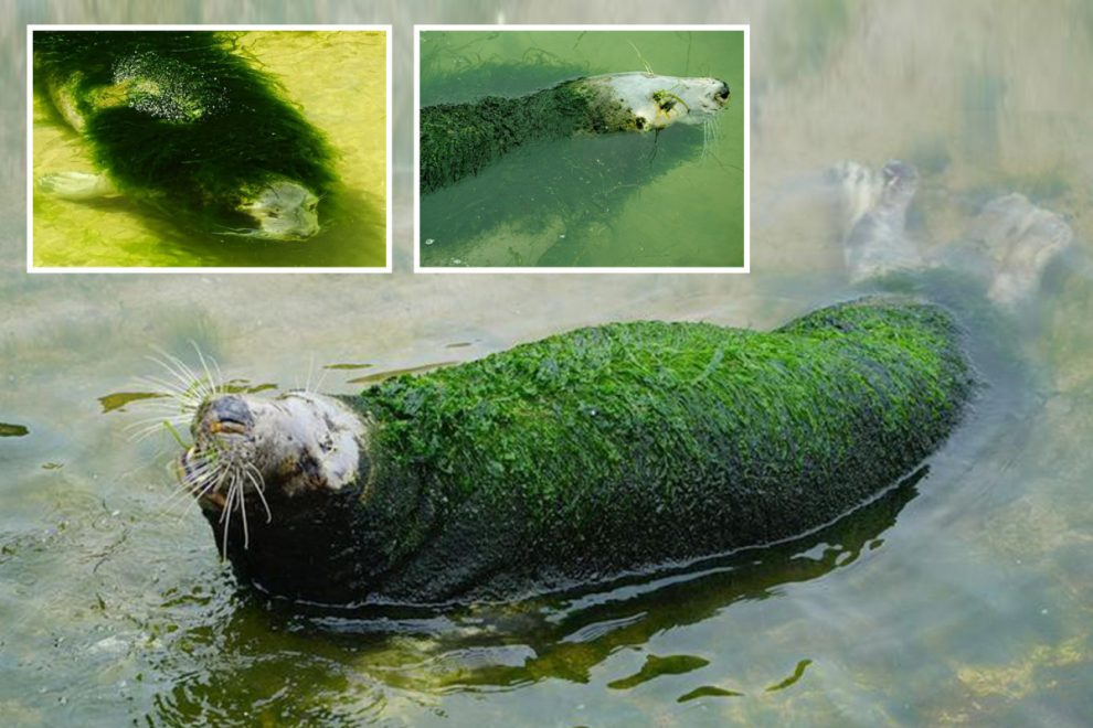 Pictures of neglected seal with seaweed growing all over its fur at 'cruel' zoo in Spain spark outrage