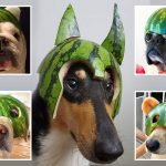 Bored dog owners show the fruits of their labours by carving watermelon helmets for their mutts