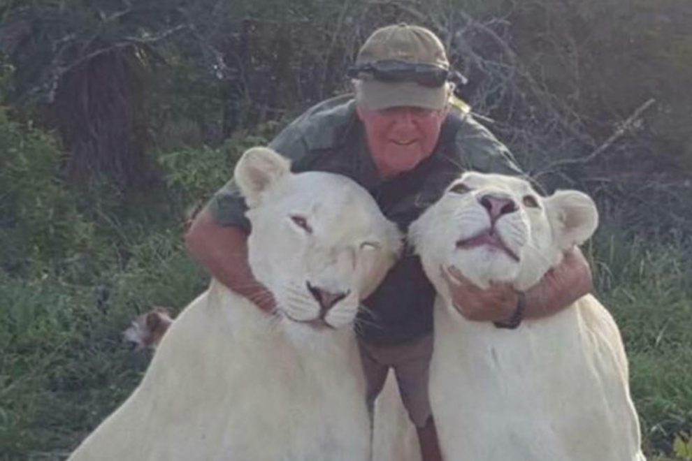 Conservationist mauled to death by two beloved white lions in horror attack while playfighting