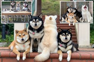 Cheeky dog ruins all family photos by yawning or facing the wrong way