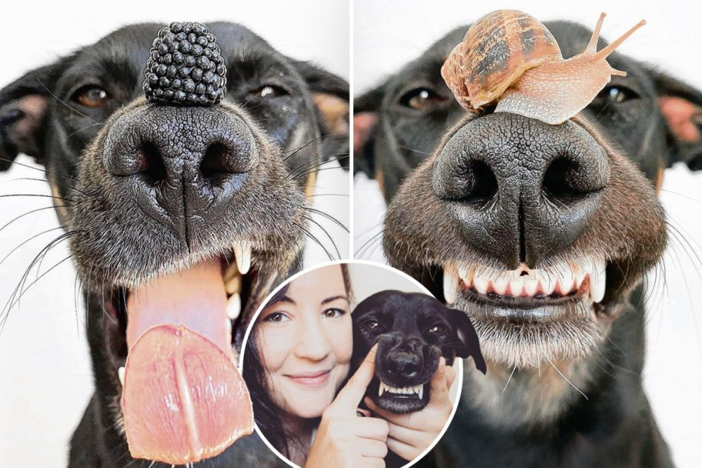 Dog becomes Insta famous by balancing random items on his nose in adorable pics
