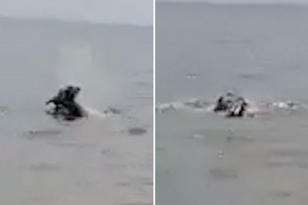 Harrowing video shows a killer hippo dragging a child to his death as crowds pelt it with rocks in Lake Victoria