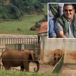 Spanish zookeeper killed by elephant 'accidentally' smashing him with her trunk while protecting calf