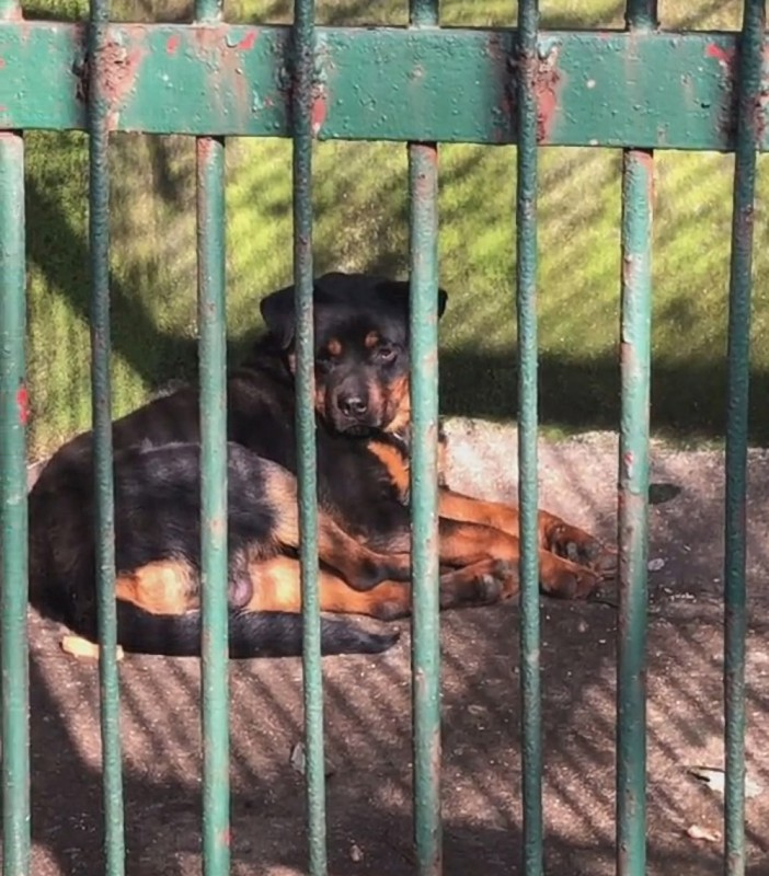 Chinese zoo 'tries to pass off dog as a WOLF as it displays pet in cage'