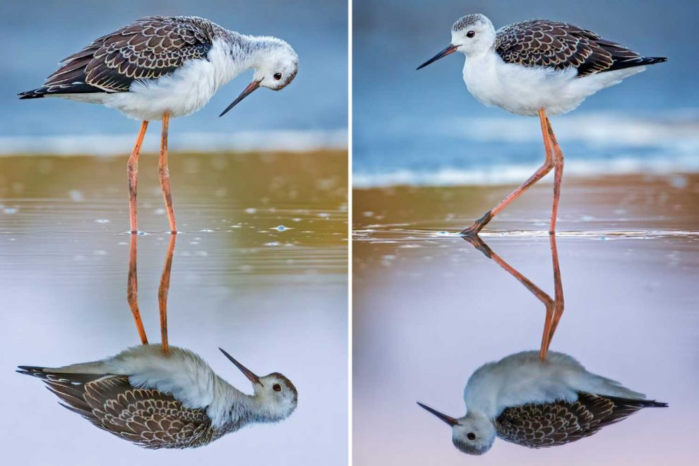 Stunning snaps show bird catching sight of itself in crystal-clear water