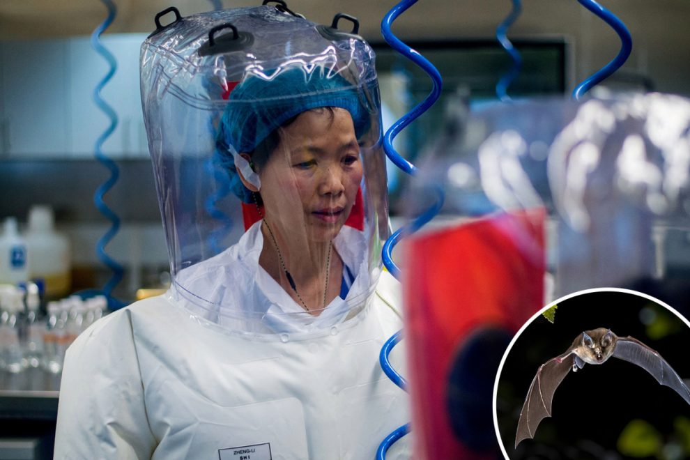 Brit spies 'helping US uncover truth' about Wuhan lab leak as it emerges China worked on bat virus 96% same as Covid