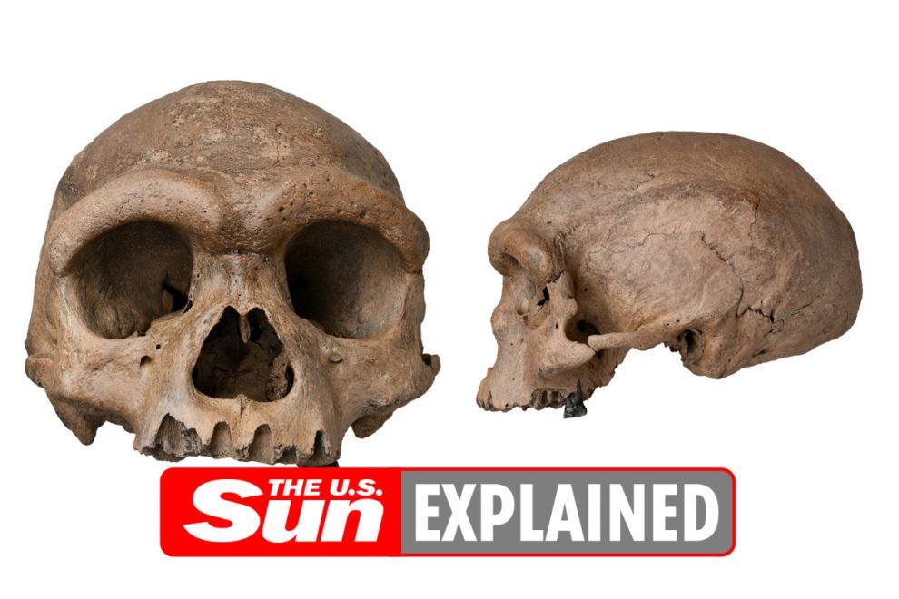 Is the dragon man skull a human skull?
