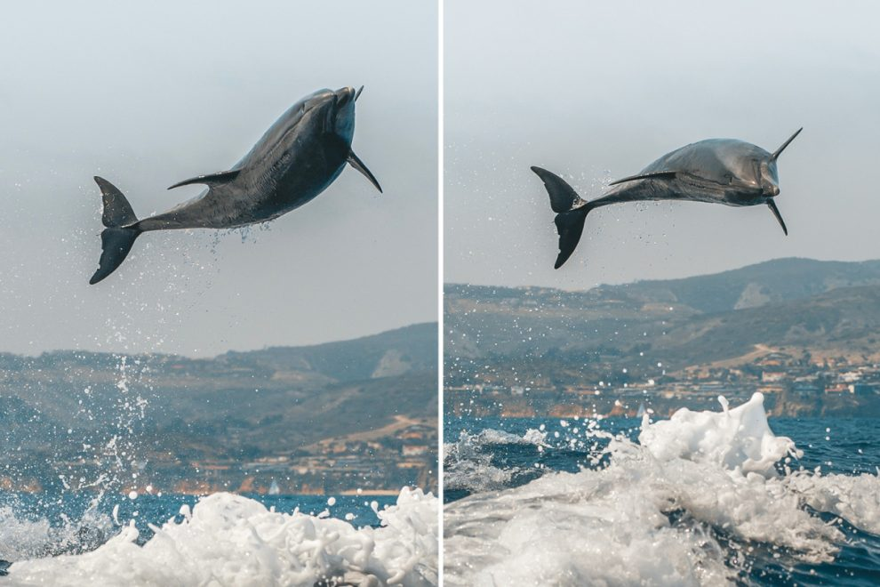 Bottle-nosed dolphin leaps 10ft in air — and gives delighted tourists a special show