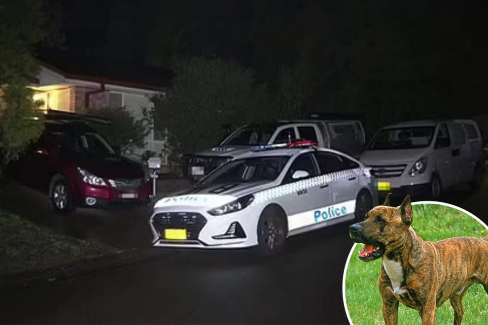 Five-week-old baby boy mauled to death by family Staffie dog at home in Australia