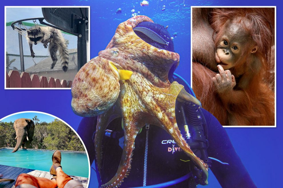 These mischievous animals enjoy behaving badly as they do their best to hassle humans