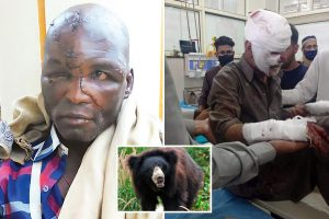 World's worst sloth bear attacks as beasts tear off faces and savage victims for taking selfies